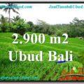 2,900 m2 LAND FOR SALE IN UBUD BALI TJUB564