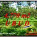 LAND FOR SALE IN Ubud Tegalalang BALI TJUB598