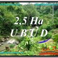 26,000 m2 LAND FOR SALE IN UBUD BALI TJUB579