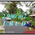 FOR SALE Affordable PROPERTY 2,900 m2 LAND IN UBUD BALI TJUB586