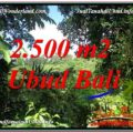 FOR SALE Affordable PROPERTY 2,500 m2 LAND IN UBUD BALI TJUB605
