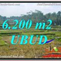 Affordable 6,200 m2 LAND IN UBUD BALI FOR SALE TJUB631