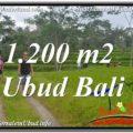 FOR SALE Affordable PROPERTY LAND IN Ubud Tegalalang BALI TJUB624