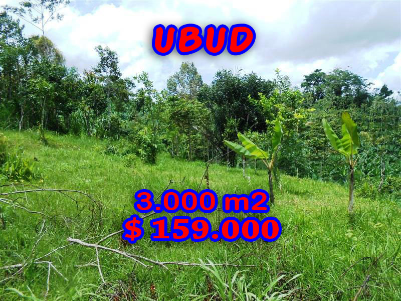Land for sale in Ubud Bali - TJUB200 Mountain view