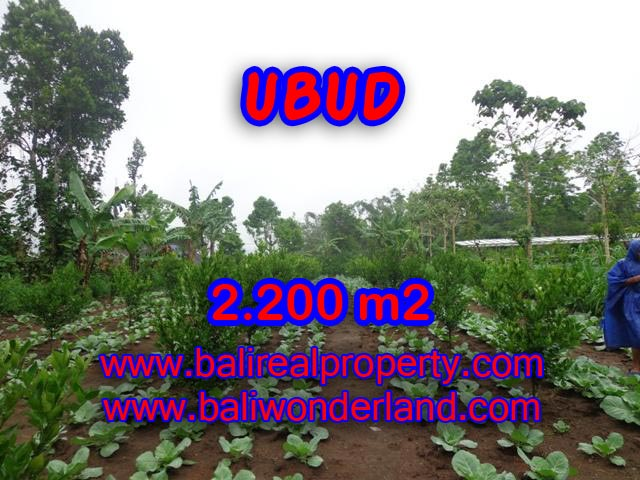 Land for sale in Ubud Bali, Unbelievable view in Ubud Tegalalang – TJUB348