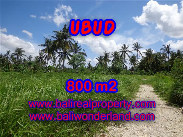 Fantastic Land for sale in Ubud Bali, reed garden view in Central Ubud – TJUB352