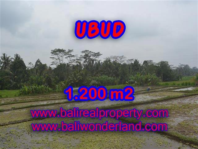 Land in Ubud Bali for sale, Outstanding view in Ubud Payangan – TJUB360