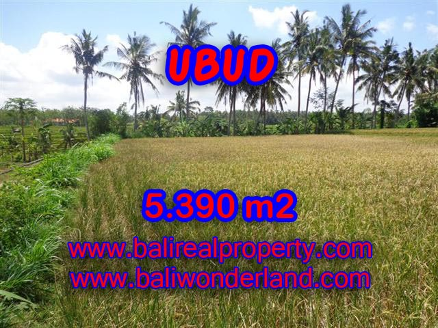 Interesting Land for sale in Ubud Bali, rice fields and Ayung river view in Ubud Mas – TJUB342