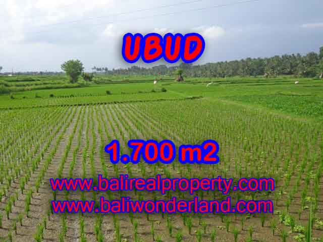 Outstanding Property in Bali for sale, land in Ubud for sale – TJUB398