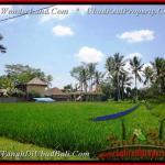 TSUB012 - TANAH DISEWAKAN - LAND FOR RENT & LEASE IN UBUD BALI by Bali Real Property - www.baliwonderland.com