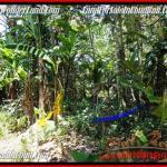 land for lease in Ubud Bali near Ubud Center