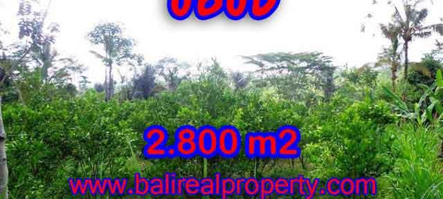 Land for sale in Bali, amazing view in Ubud Tegalalang – TJUB375