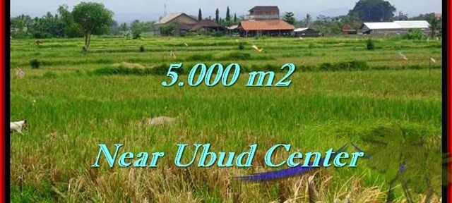 FOR SALE Affordable PROPERTY 5,000 m2 LAND IN UBUD TJUB474