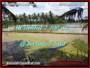 Exotic PROPERTY 2,200 m2 LAND FOR SALE IN UBUD BALI TJUB475