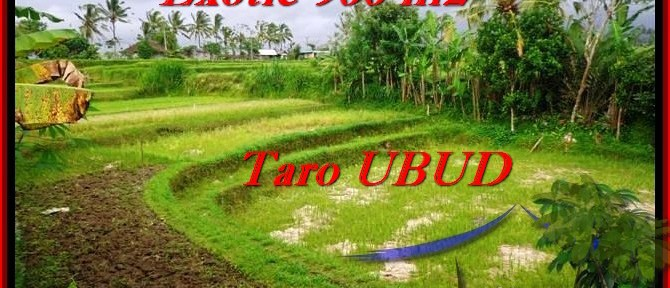 Affordable PROPERTY LAND IN Ubud Tegalalang BALI FOR SALE TJUB464