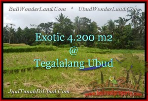 Magnificent 4,200 m2 LAND IN UBUD BALI FOR SALE TJUB461