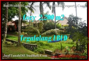 2,200 m2 LAND SALE IN UBUD TJUB462