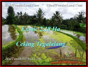 FOR SALE Magnificent PROPERTY 21,800 m2 LAND IN UBUD BALI TJUB471