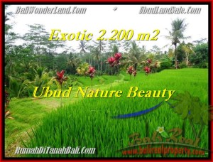 Magnificent LAND FOR SALE IN Ubud Tegalalang BALI TJUB480