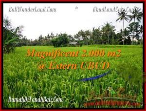 Magnificent LAND IN Ubud Pejeng BALI FOR SALE TJUB485