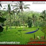 Affordable LAND SALE IN UBUD TJUB490