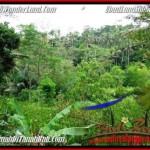 Affordable PROPERTY 2,000 m2 LAND FOR SALE IN Ubud Tegalalang BALI TJUB490