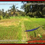 Beautiful PROPERTY LAND SALE IN Ubud Pejeng BALI TJUB452