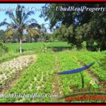 Exotic PROPERTY LAND IN Ubud Pejeng BALI FOR SALE TJUB452