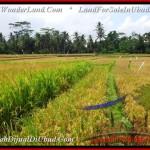 1,500 m2 LAND FOR SALE IN UBUD BALI TJUB488
