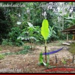 Affordable 1,500 m2 LAND IN UBUD BALI FOR SALE TJUB489