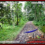 FOR SALE Beautiful PROPERTY LAND IN UBUD TJUB490
