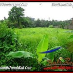 Exotic UBUD BALI 2,600 m2 LAND FOR SALE TJUB491