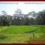 UBUD 2.885 m2 LAND FOR SALE TJUB442