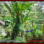 Sentral Ubud BALI LAND FOR SALE TJUB415