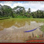 Exotic PROPERTY 2,600 m2 LAND FOR SALE IN Ubud Tegalalang TJUB421