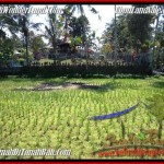 Beautiful PROPERTY 1,900 m2 LAND SALE IN Ubud Tegalalang TJUB505