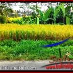 Magnificent PROPERTY Ubud Tegalalang 700 m2 LAND FOR SALE TJUB497