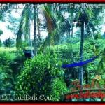 Beautiful PROPERTY 700 m2 LAND SALE IN Ubud Tegalalang TJUB497