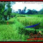 LAND SALE IN Ubud Tegalalang BALI TJUB497
