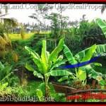 FOR SALE Affordable LAND IN Ubud Tegalalang BALI TJUB497