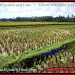 Magnificent PROPERTY Ubud Pejeng 2,800 m2 LAND FOR SALE TJUB498