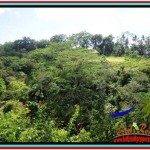 FOR SALE Magnificent 3,400 m2 LAND IN UBUD BALI TJUB514