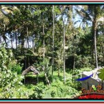 Beautiful PROPERTY LAND FOR SALE IN UBUD BALI TJUB515