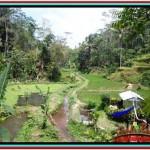 FOR SALE Magnificent 10,000 m2 LAND IN UBUD BALI TJUB519