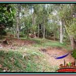Affordable PROPERTY 12,000 m2 LAND IN Ubud Tampak Siring FOR SALE TJUB520