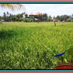 FOR SALE Magnificent 1,200 m2 LAND IN UBUD BALI TJUB525