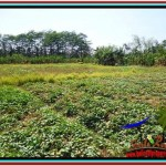 Affordable PROPERTY LAND SALE IN UBUD TJUB527