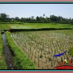 Magnificent PROPERTY LAND FOR SALE IN UBUD BALI TJUB529