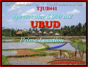 Exotic 8.000 m2 LAND FOR SALE IN UBUD BALI TJUB441