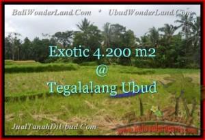 Beautiful PROPERTY Ubud Tegalalang 4,200 m2 LAND FOR SALE TJUB461